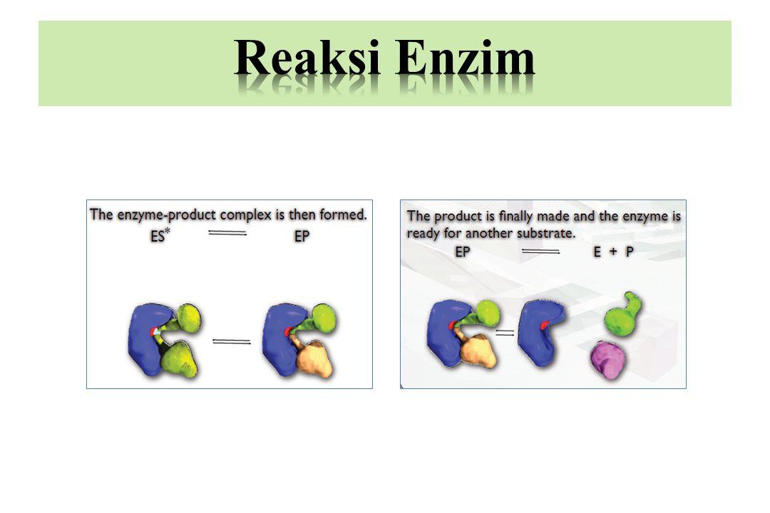 Reaksi Enzim