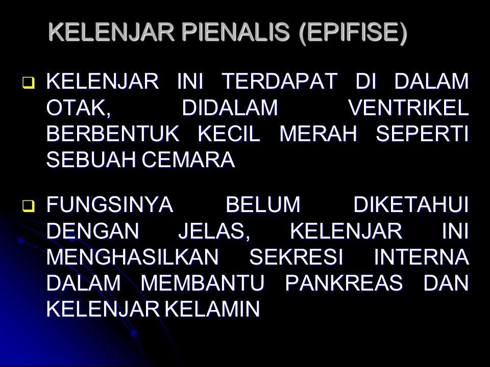 KELENJAR PIENALIS (EPIFISE)