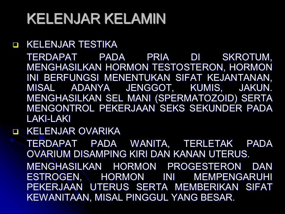 KELENJAR KELAMIN KELENJAR TESTIKA