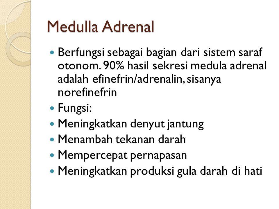 Medulla Adrenal