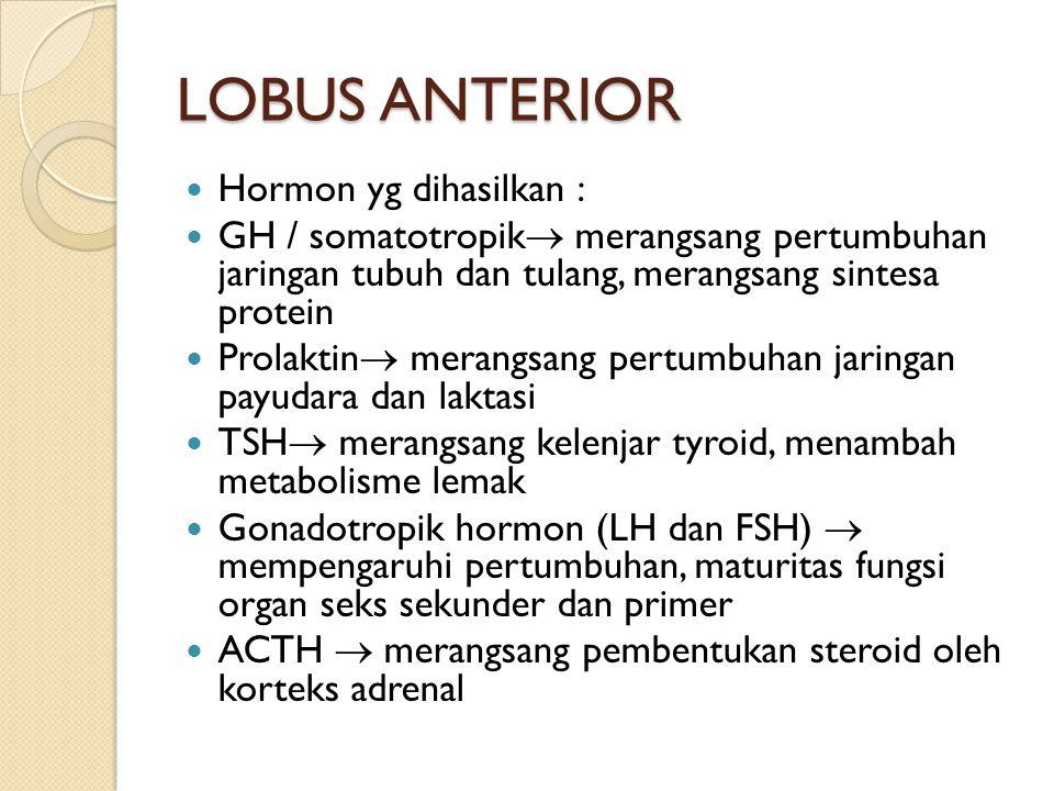 LOBUS ANTERIOR Hormon yg dihasilkan :