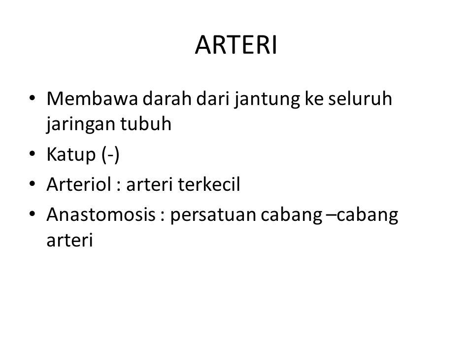 ARTERI Membawa darah dari jantung ke seluruh jaringan tubuh Katup (-)