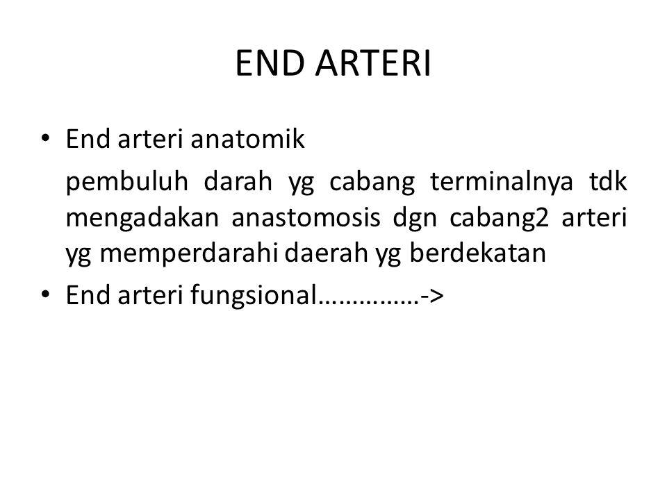 END ARTERI End arteri anatomik