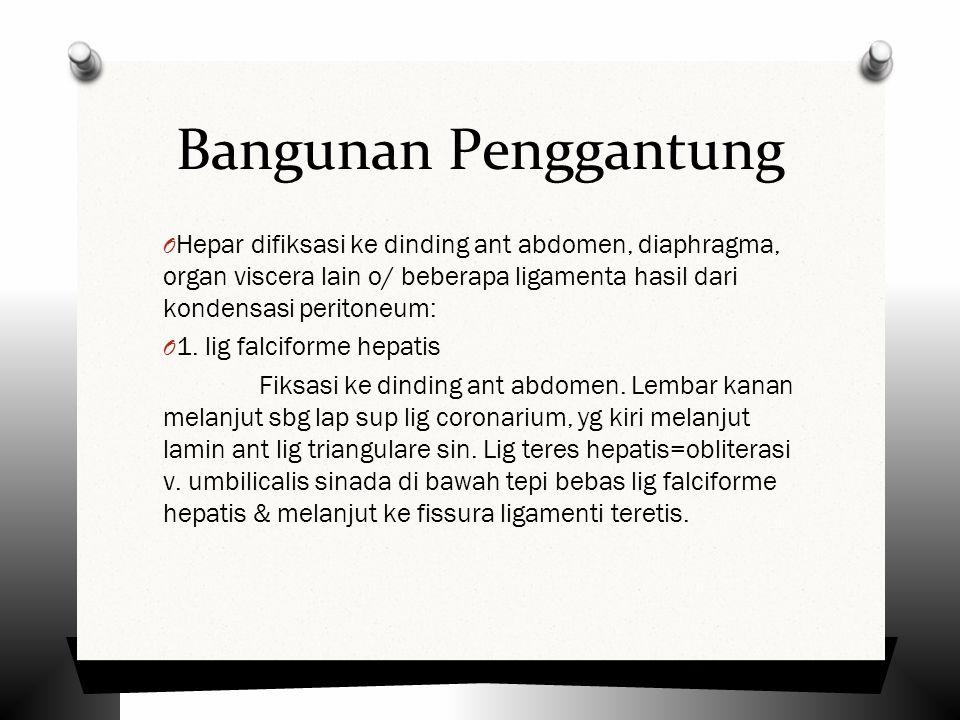 Bangunan Penggantung Hepar difiksasi ke dinding ant abdomen, diaphragma, organ viscera lain o/ beberapa ligamenta hasil dari kondensasi peritoneum: