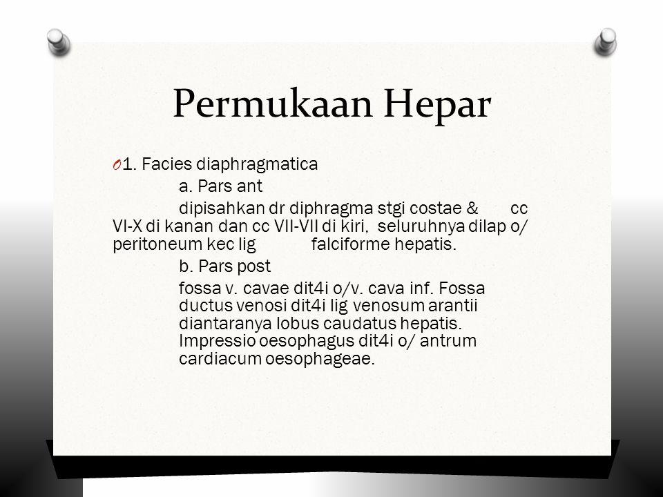 Permukaan Hepar 1. Facies diaphragmatica a. Pars ant