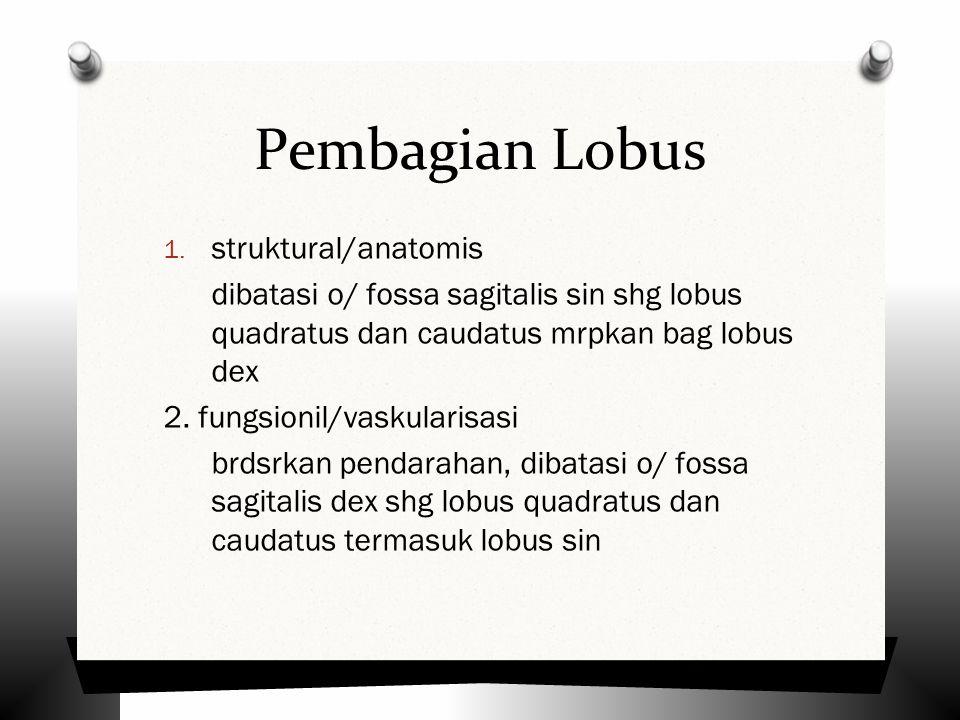 Pembagian Lobus struktural/anatomis
