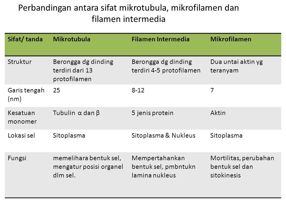 Perbandingan antara sifat mikrotubula, mikrofilamen dan filamen intermedia