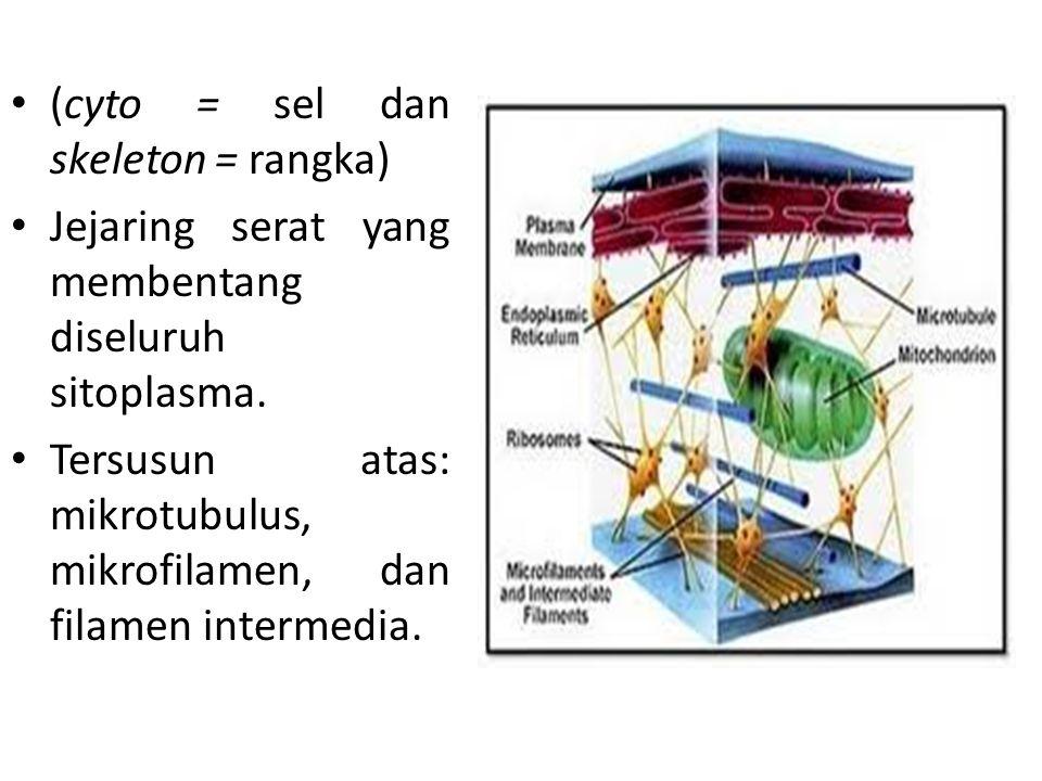 (cyto = sel dan skeleton = rangka)