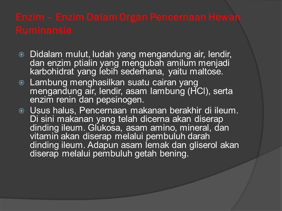Enzim – Enzim Dalam Organ Pencernaan Hewan Ruminansia
