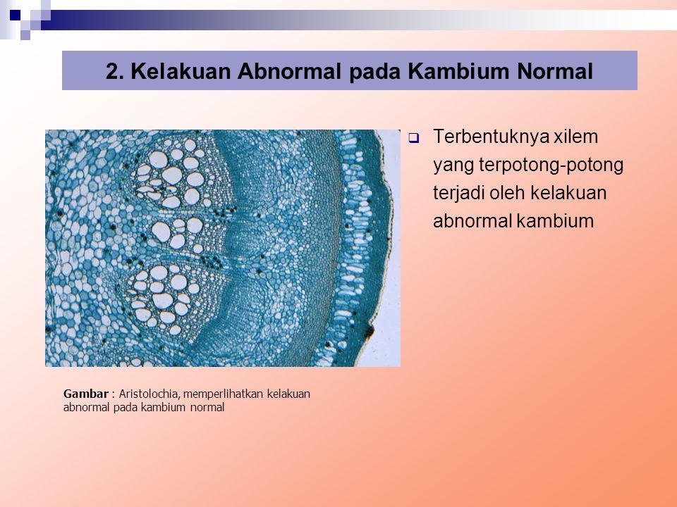 2. Kelakuan Abnormal pada Kambium Normal