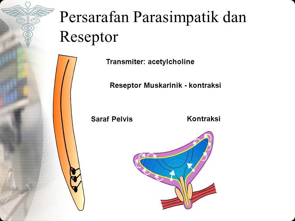 Persarafan Parasimpatik dan Reseptor