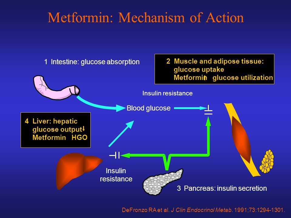 Metformin: Mechanism of Action