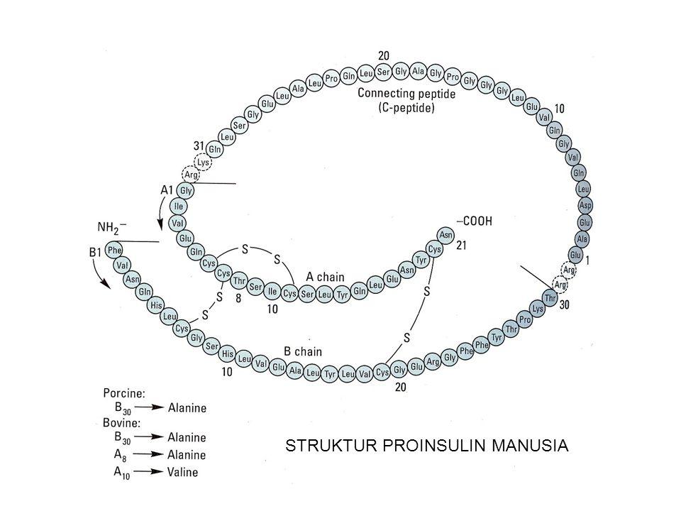 STRUKTUR PROINSULIN MANUSIA