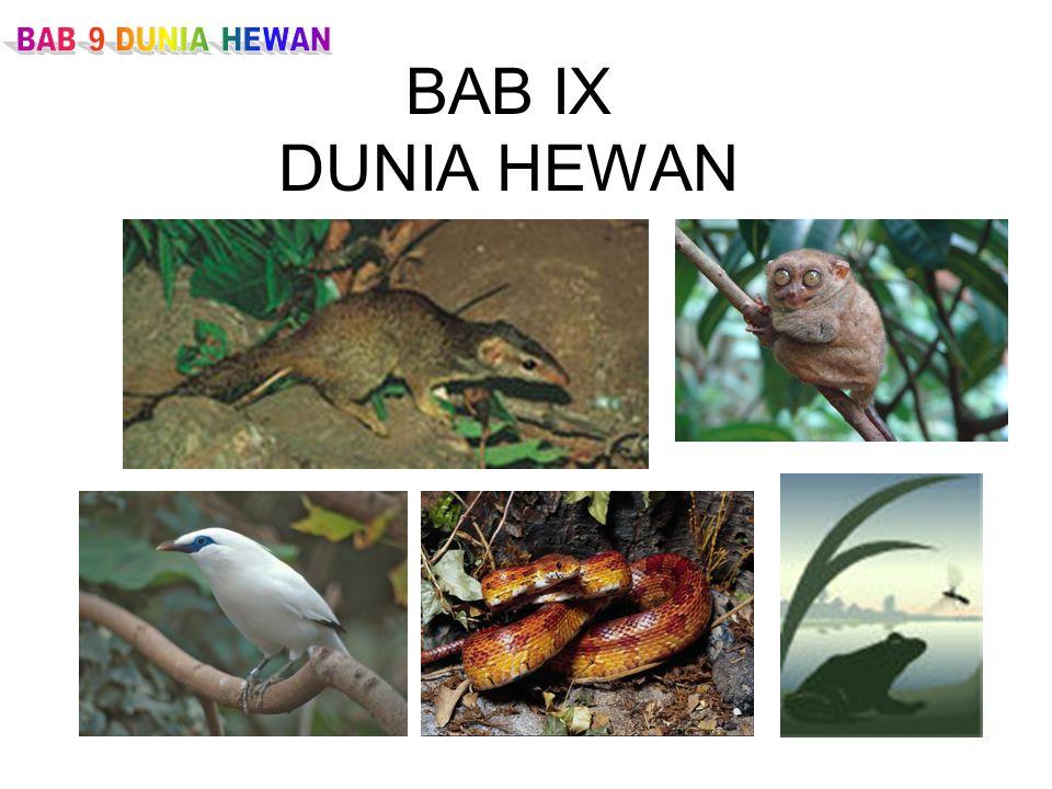 BAB 9 DUNIA HEWAN BAB IX DUNIA HEWAN