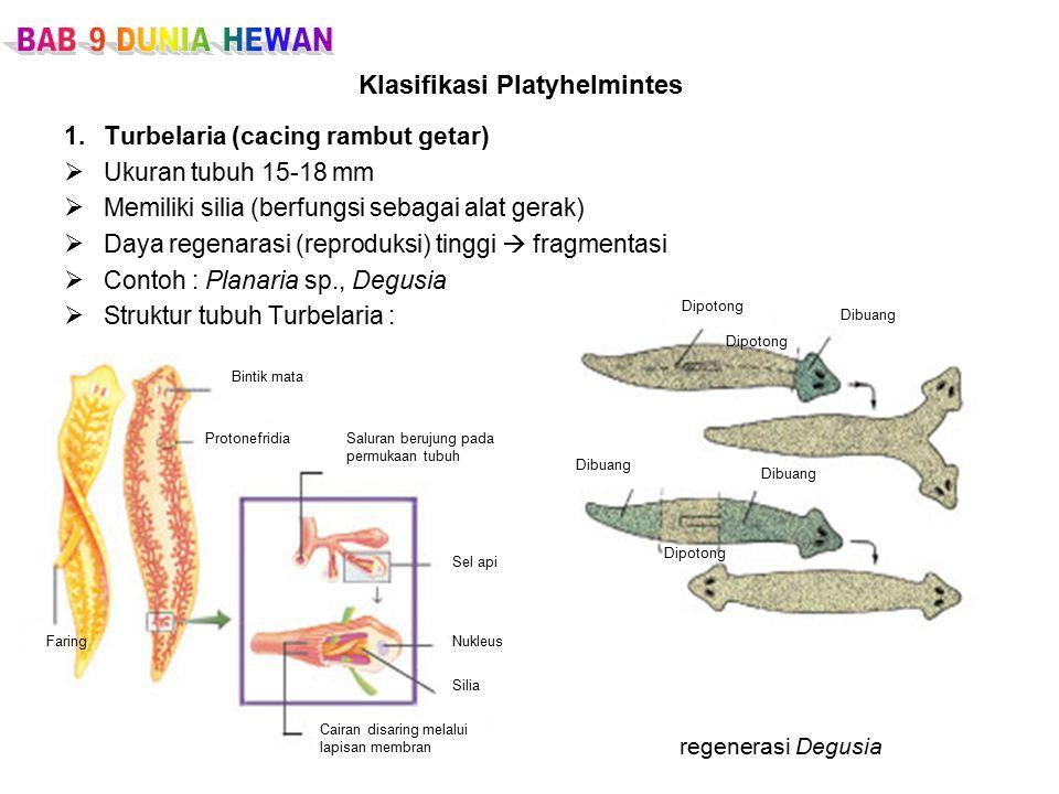 Klasifikasi Platyhelmintes
