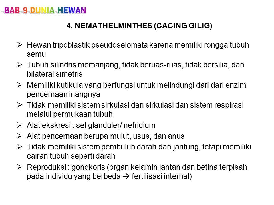 4. NEMATHELMINTHES (CACING GILIG)