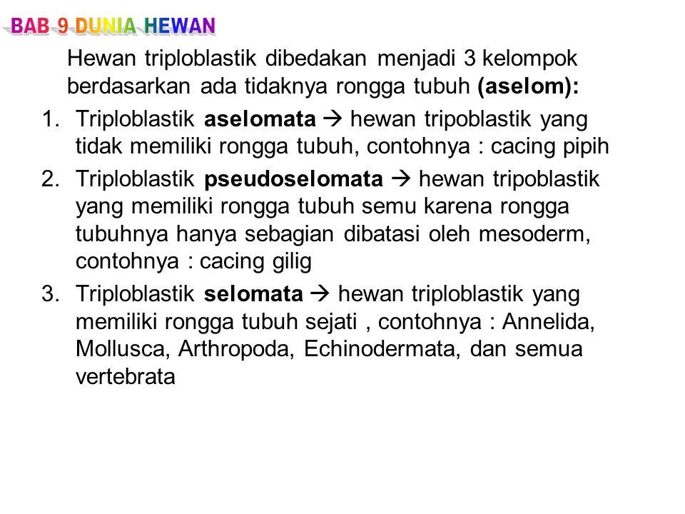 BAB 9 DUNIA HEWAN Hewan triploblastik dibedakan menjadi 3 kelompok berdasarkan ada tidaknya rongga tubuh (aselom):