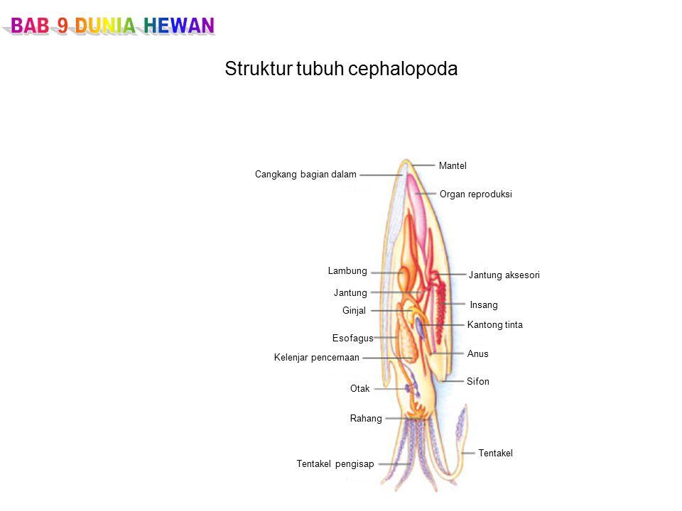 Struktur tubuh cephalopoda