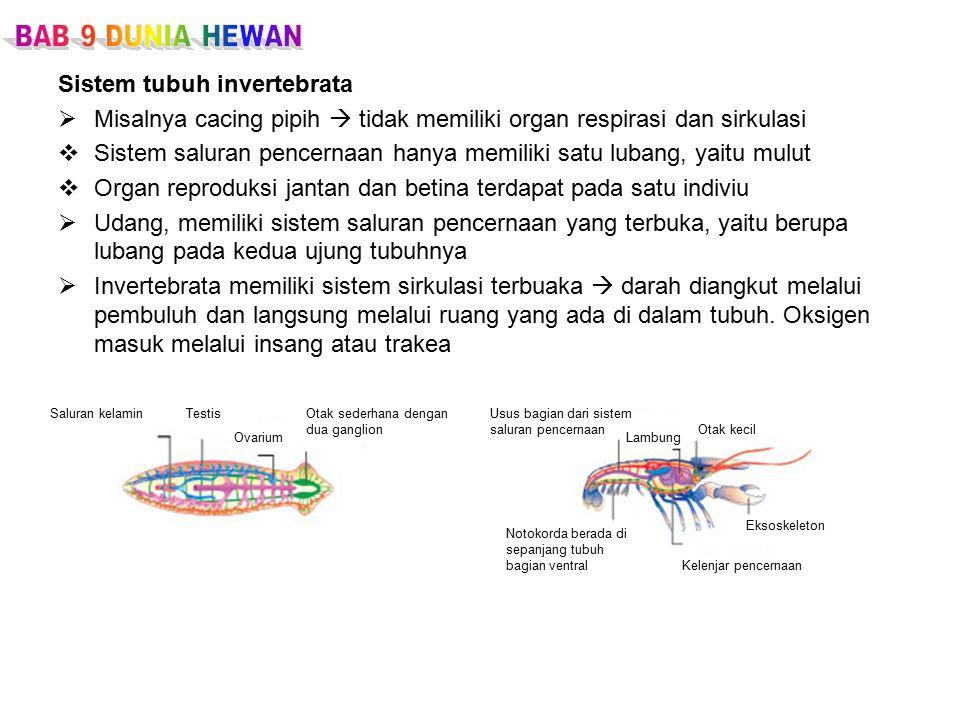 Sistem tubuh invertebrata