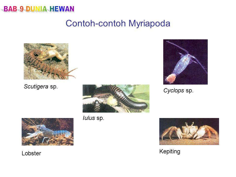 Contoh-contoh Myriapoda