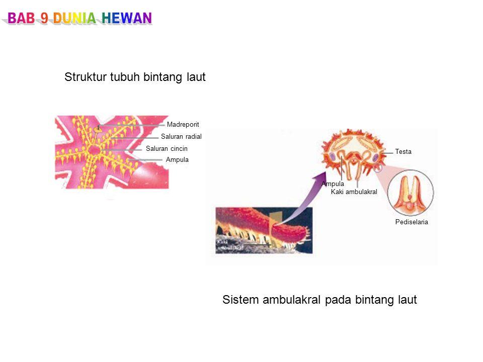 Struktur tubuh bintang laut