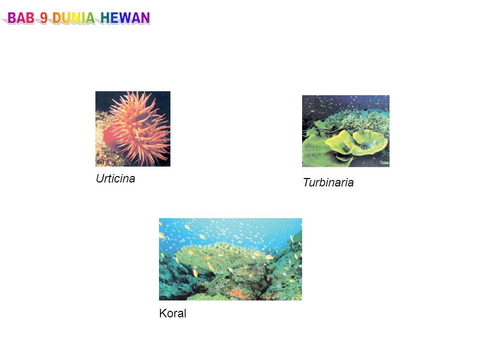 BAB 9 DUNIA HEWAN Urticina Turbinaria Koral