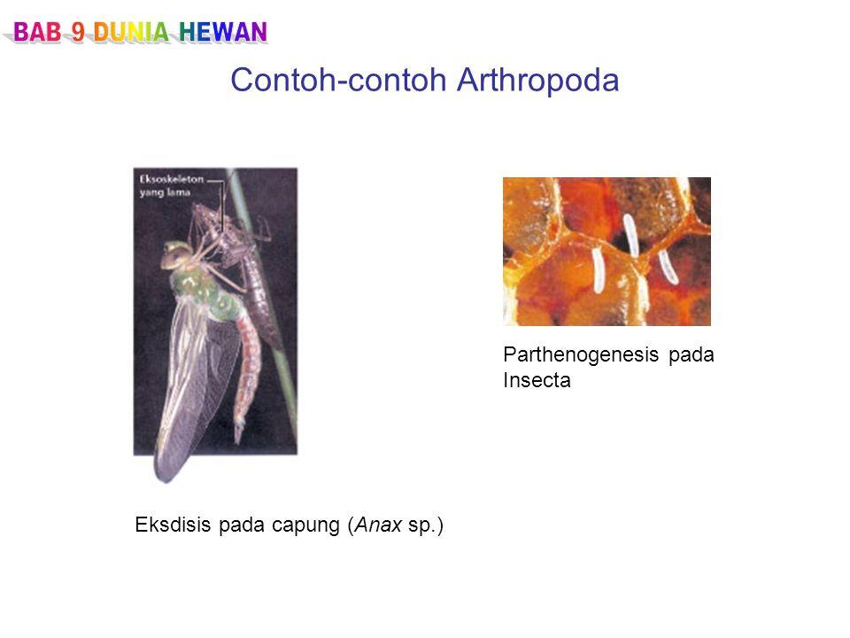 Contoh-contoh Arthropoda