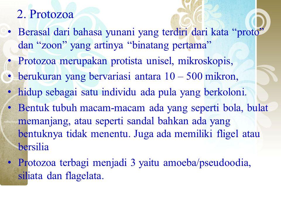 2. Protozoa Berasal dari bahasa yunani yang terdiri dari kata proto dan zoon yang artinya binatang pertama