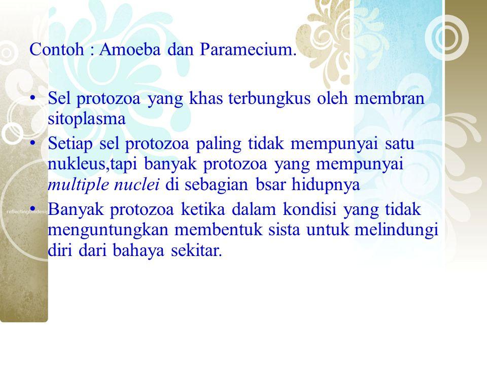 Contoh : Amoeba dan Paramecium.