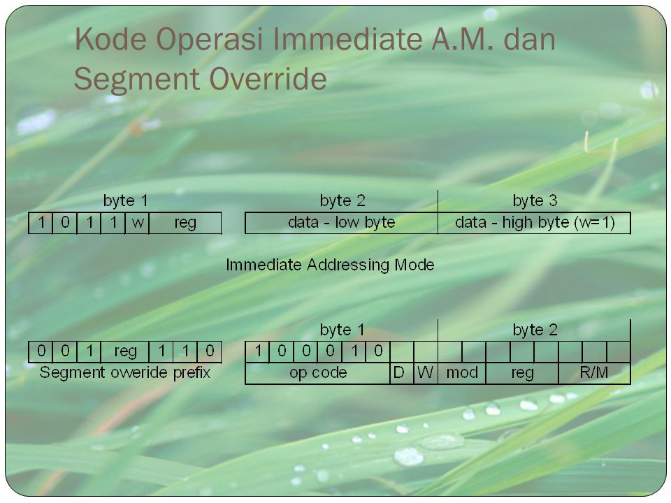 Kode Operasi Immediate A.M. dan Segment Override