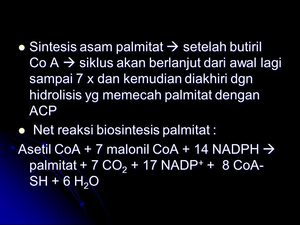 Sintesis asam palmitat  setelah butiril Co A  siklus akan berlanjut dari awal lagi sampai 7 x dan kemudian diakhiri dgn hidrolisis yg memecah palmitat dengan ACP