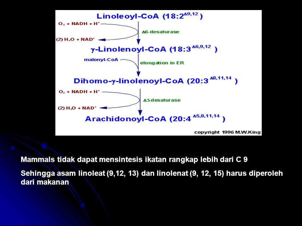 Mammals tidak dapat mensintesis ikatan rangkap lebih dari C 9