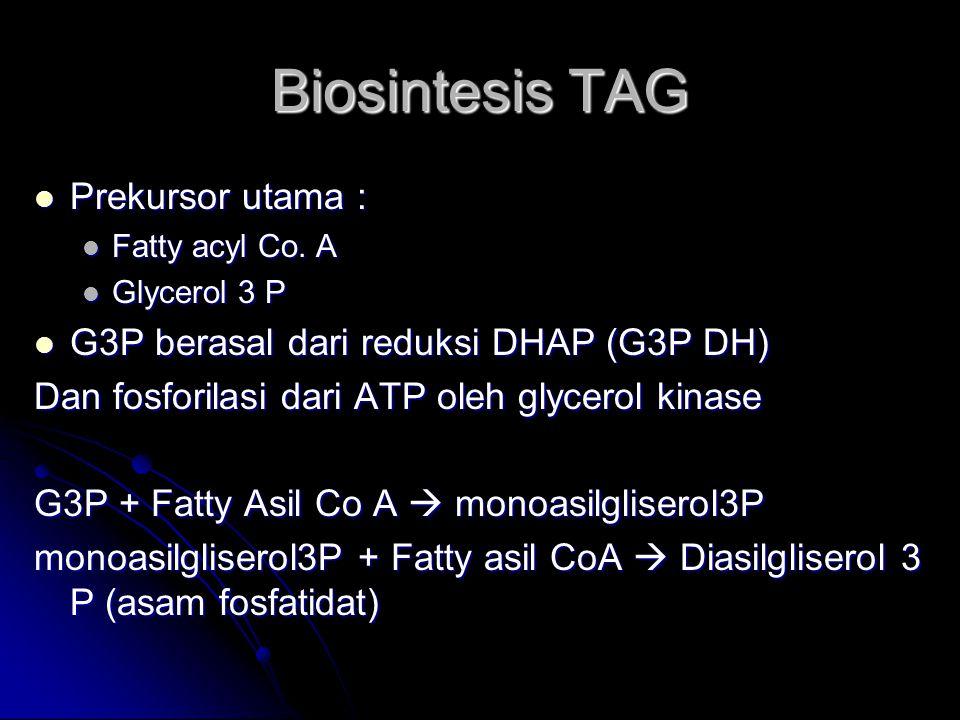 Biosintesis TAG Prekursor utama :