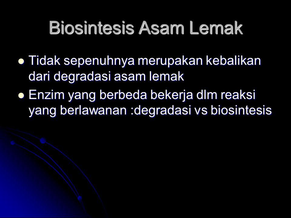 Biosintesis Asam Lemak