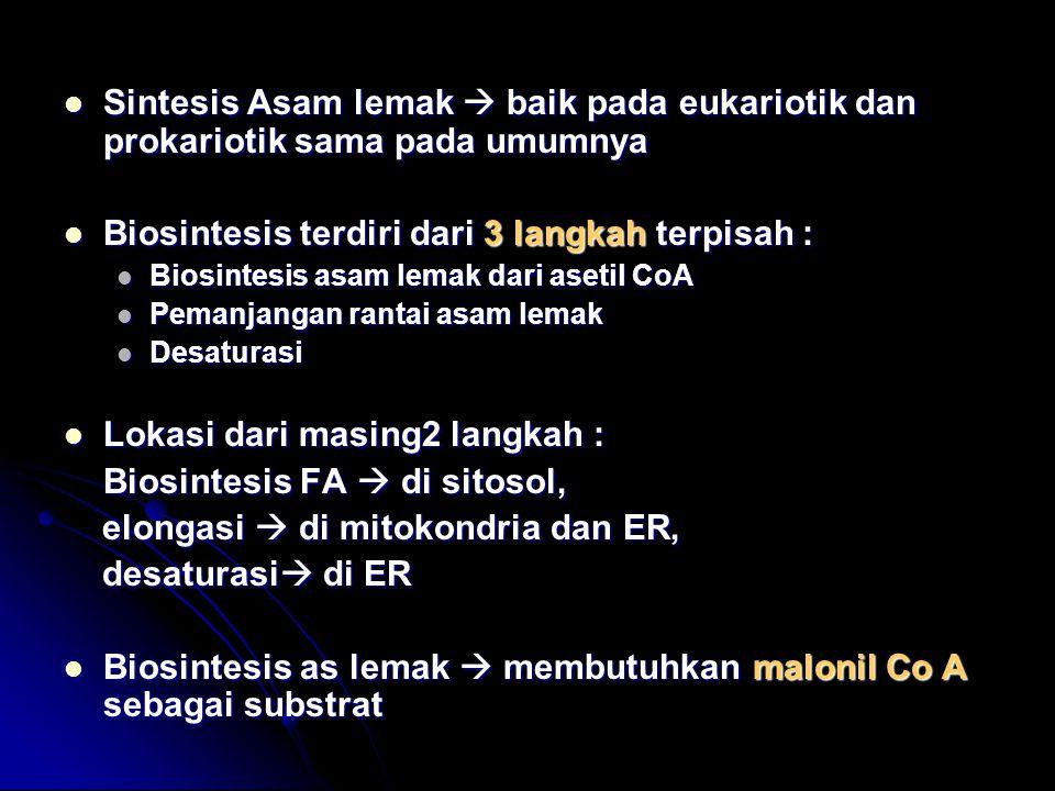 Biosintesis terdiri dari 3 langkah terpisah :