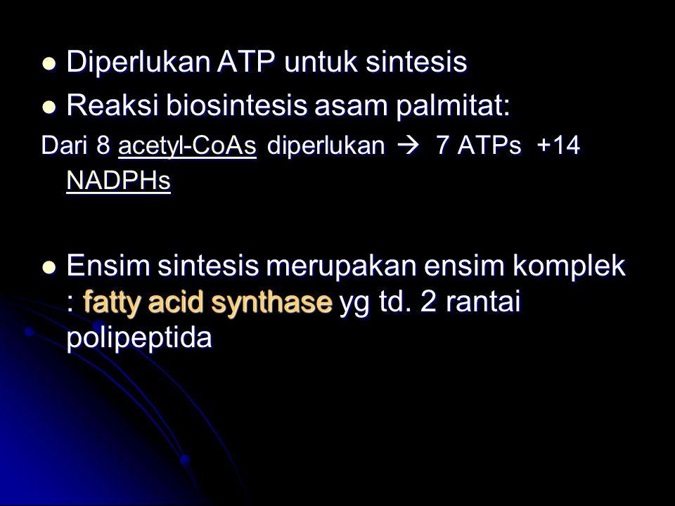 Diperlukan ATP untuk sintesis Reaksi biosintesis asam palmitat: