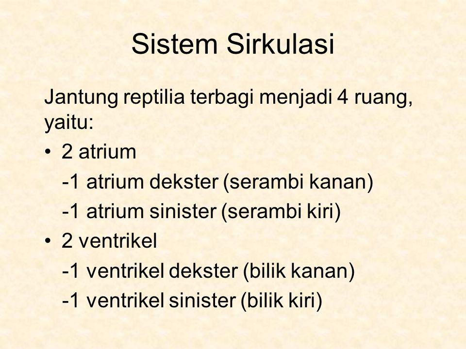 Sistem Sirkulasi Jantung reptilia terbagi menjadi 4 ruang, yaitu: