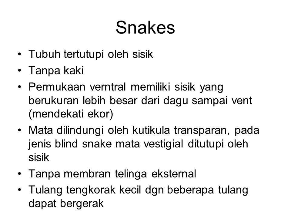 Snakes Tubuh tertutupi oleh sisik Tanpa kaki