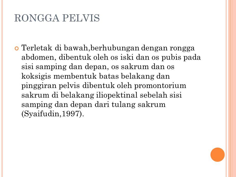 RONGGA PELVIS