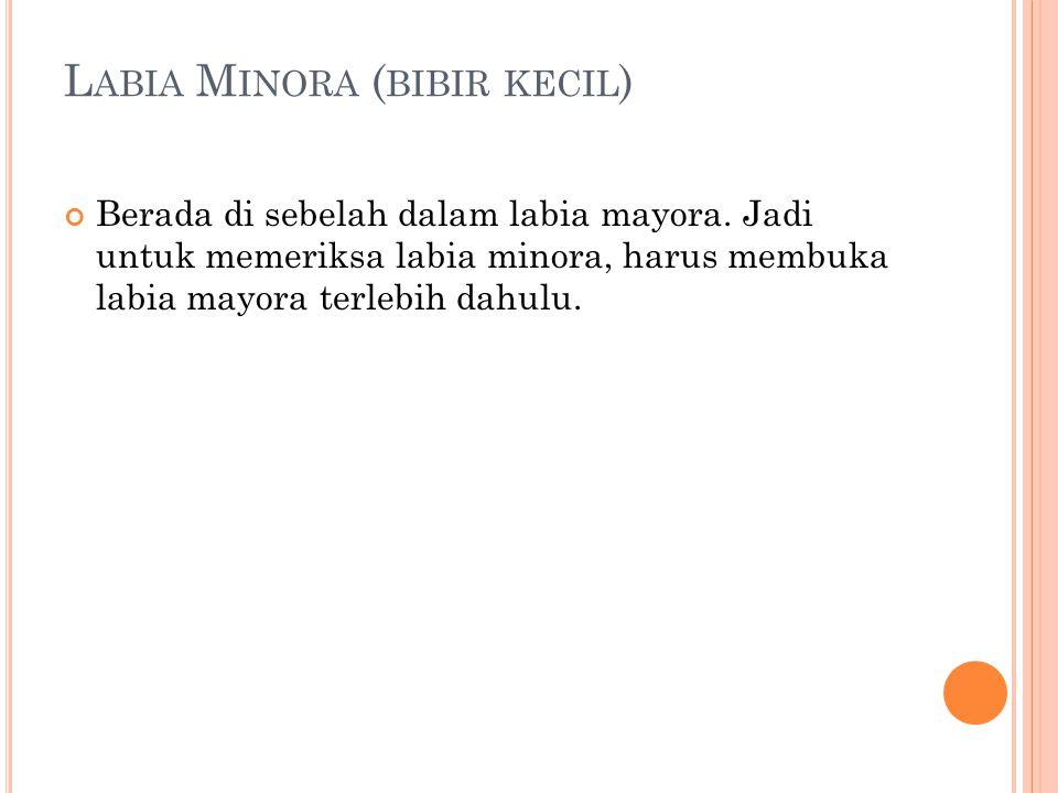 Labia Minora (bibir kecil)