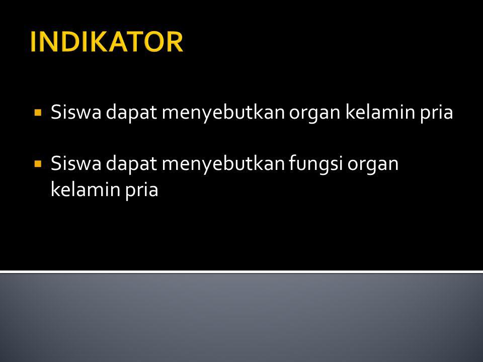 INDIKATOR Siswa dapat menyebutkan organ kelamin pria