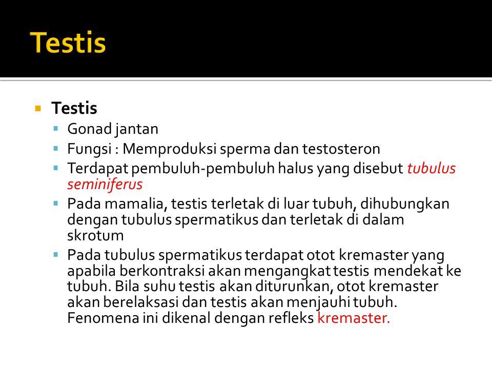 Testis Testis Gonad jantan Fungsi : Memproduksi sperma dan testosteron