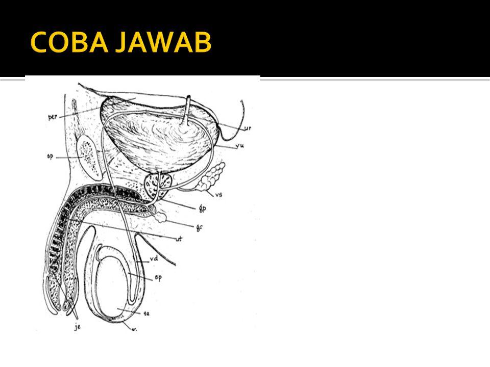 COBA JAWAB