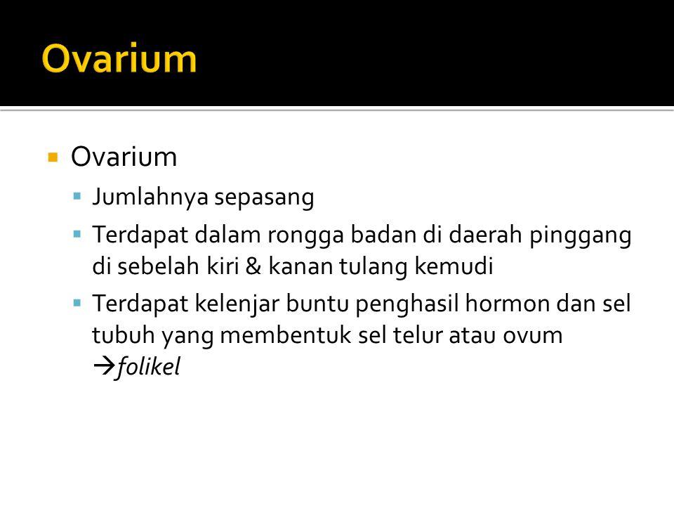 Ovarium Ovarium Jumlahnya sepasang