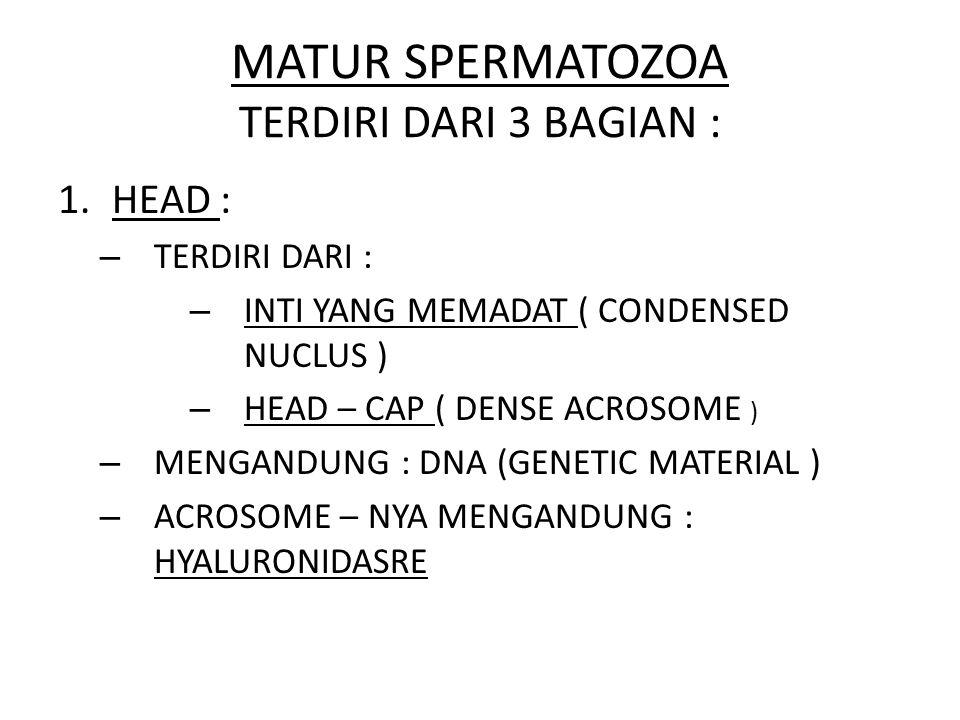 MATUR SPERMATOZOA TERDIRI DARI 3 BAGIAN :