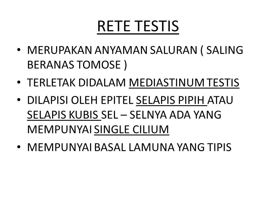 RETE TESTIS MERUPAKAN ANYAMAN SALURAN ( SALING BERANAS TOMOSE )