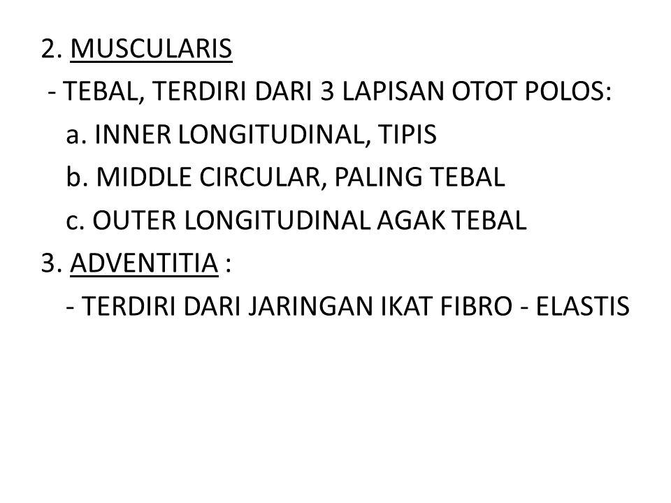 2. MUSCULARIS - TEBAL, TERDIRI DARI 3 LAPISAN OTOT POLOS: a