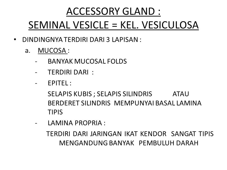 ACCESSORY GLAND : SEMINAL VESICLE = KEL. VESICULOSA