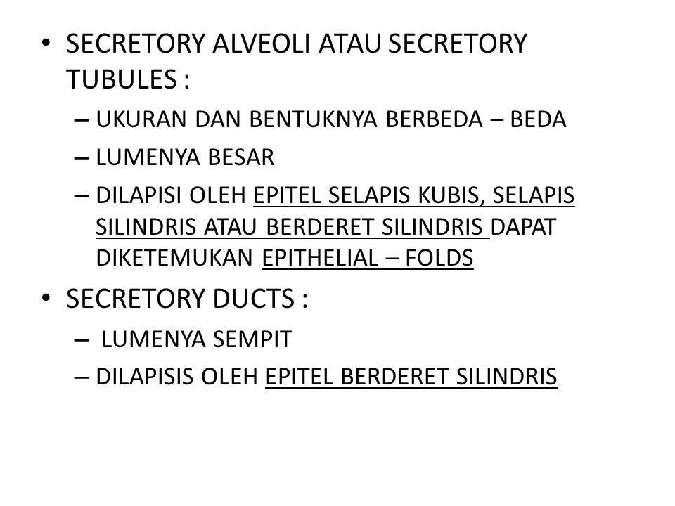 SECRETORY ALVEOLI ATAU SECRETORY TUBULES :