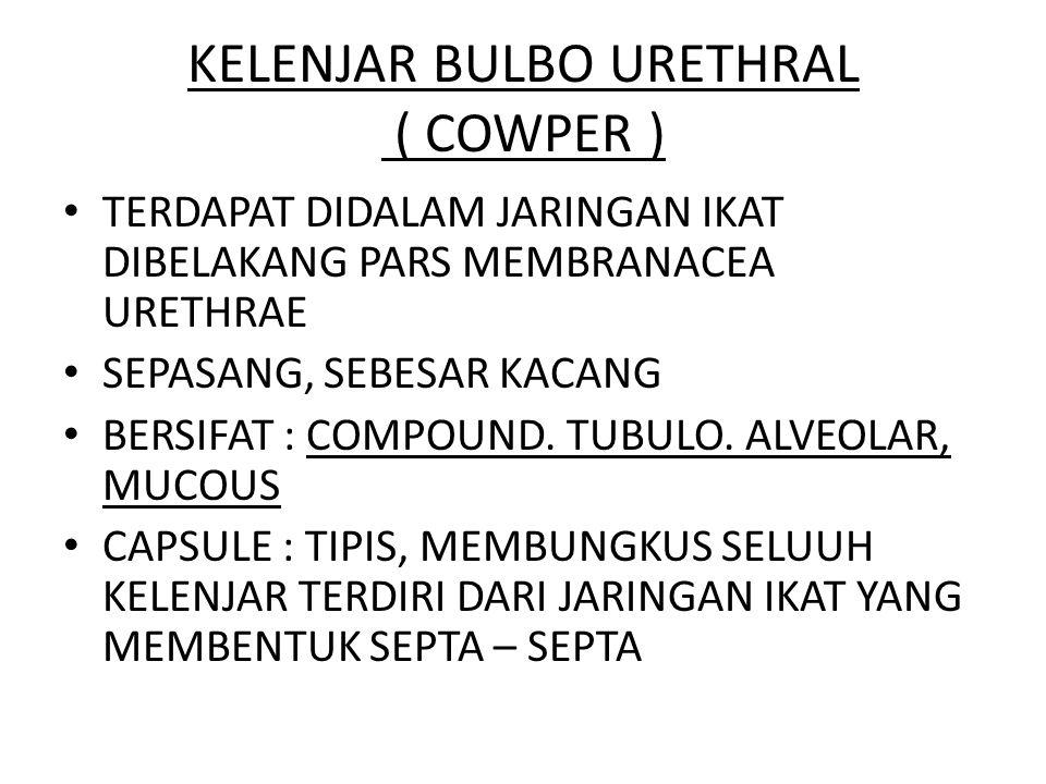 KELENJAR BULBO URETHRAL ( COWPER )